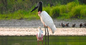 Most sell birding vacation package: The Jabiru Package