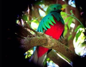 The Quetzal extension vacation package